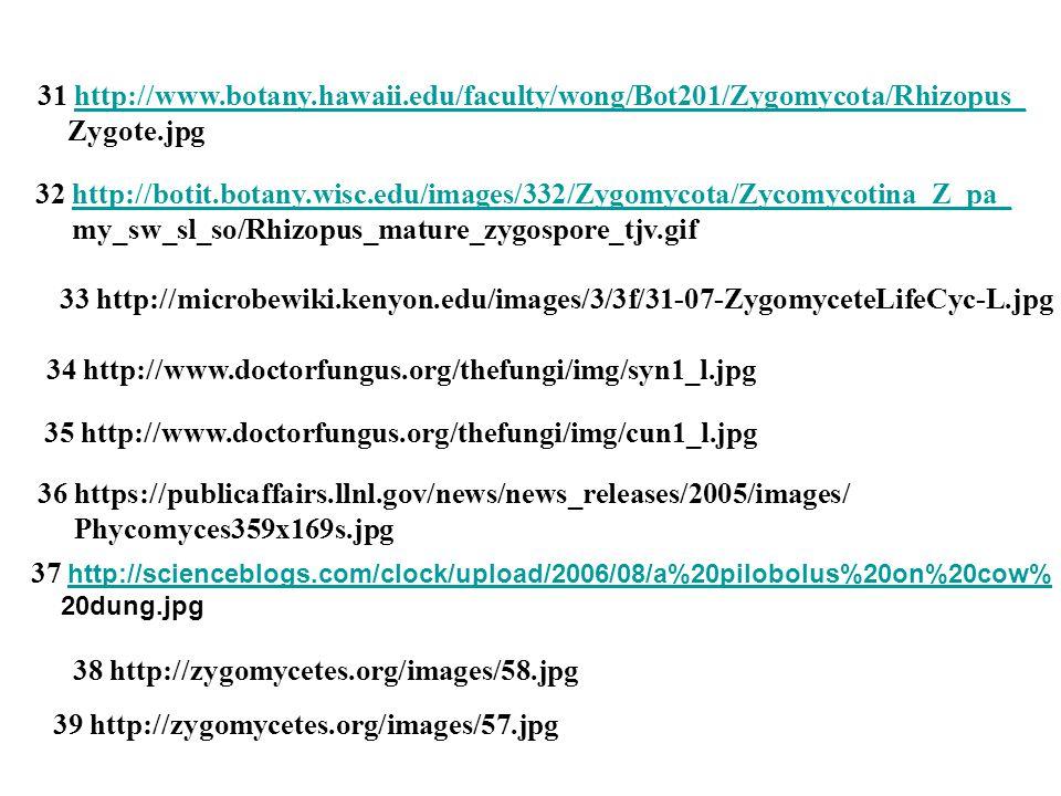 34 http://www.doctorfungus.org/thefungi/img/syn1_l.jpg