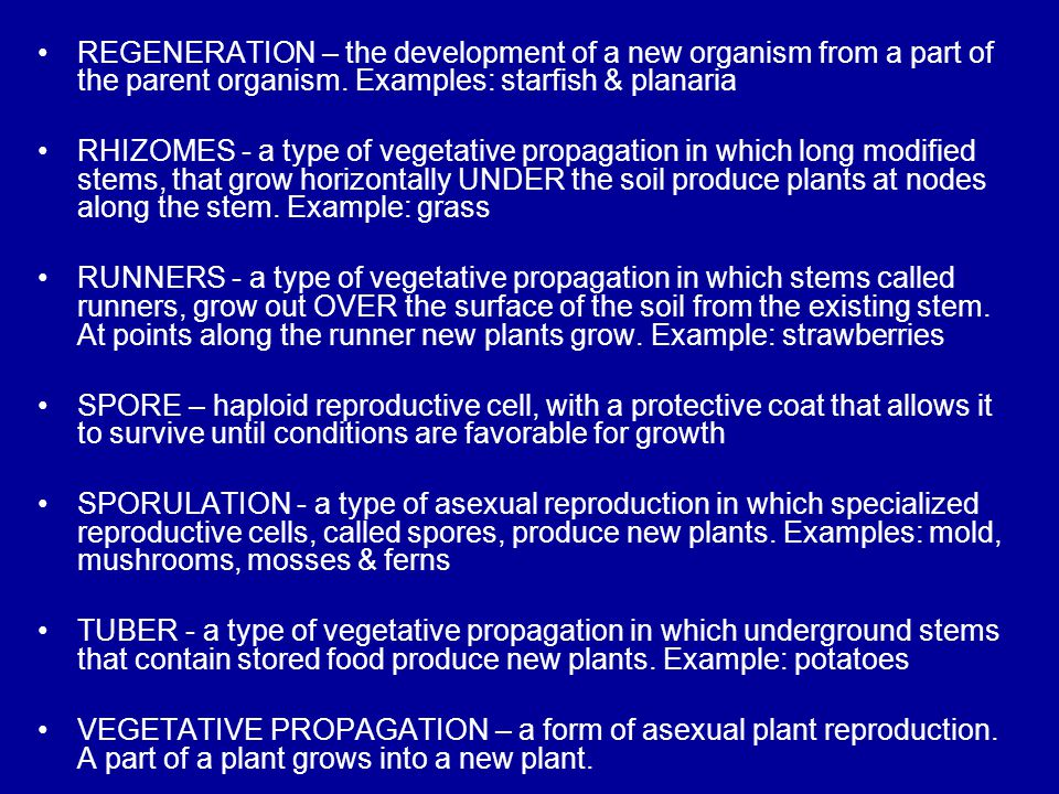 REGENERATION – the development of a new organism from a part of the parent organism. Examples: starfish & planaria