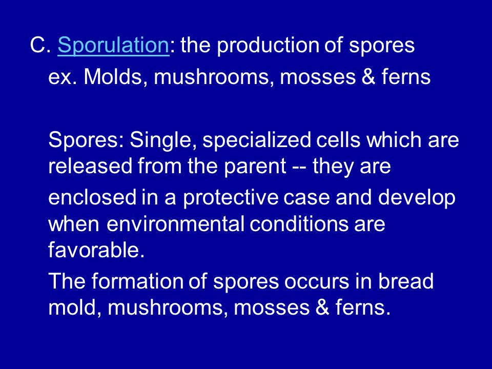 C. Sporulation: the production of spores