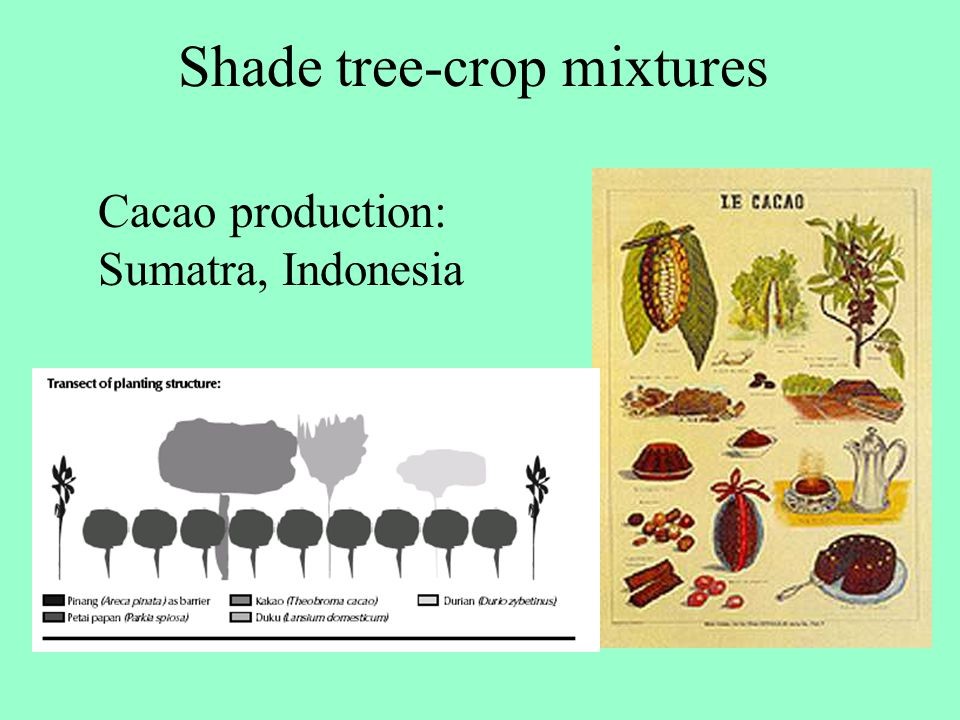 Shade tree-crop mixtures