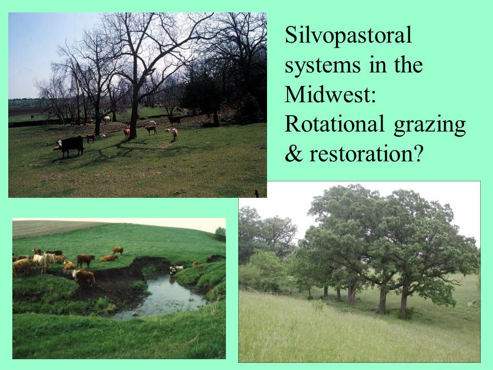 Silvopastoral systems in the Midwest: Rotational grazing & restoration