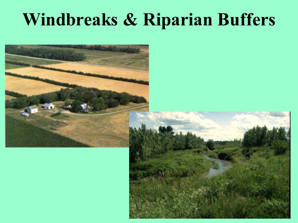 Windbreaks & Riparian Buffers