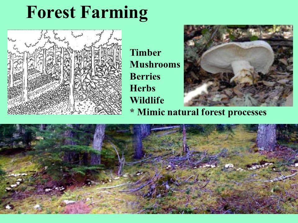 Forest Farming Timber Mushrooms Berries Herbs Wildlife
