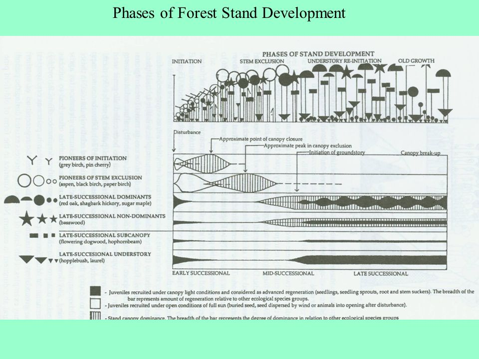 Phases of Forest Stand Development