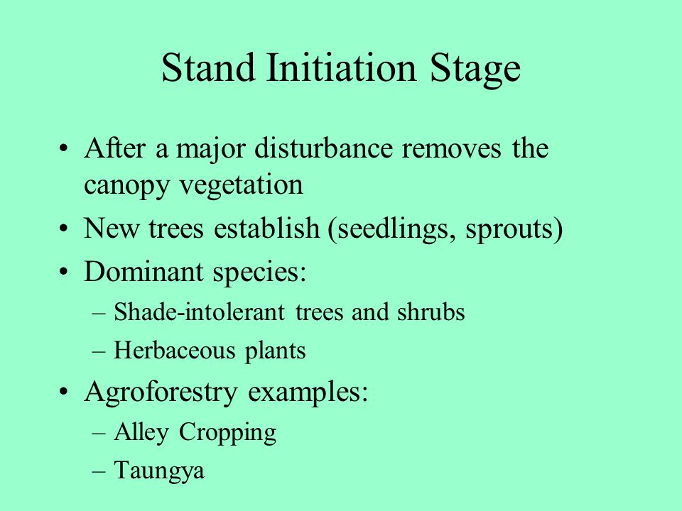 Stand Initiation Stage