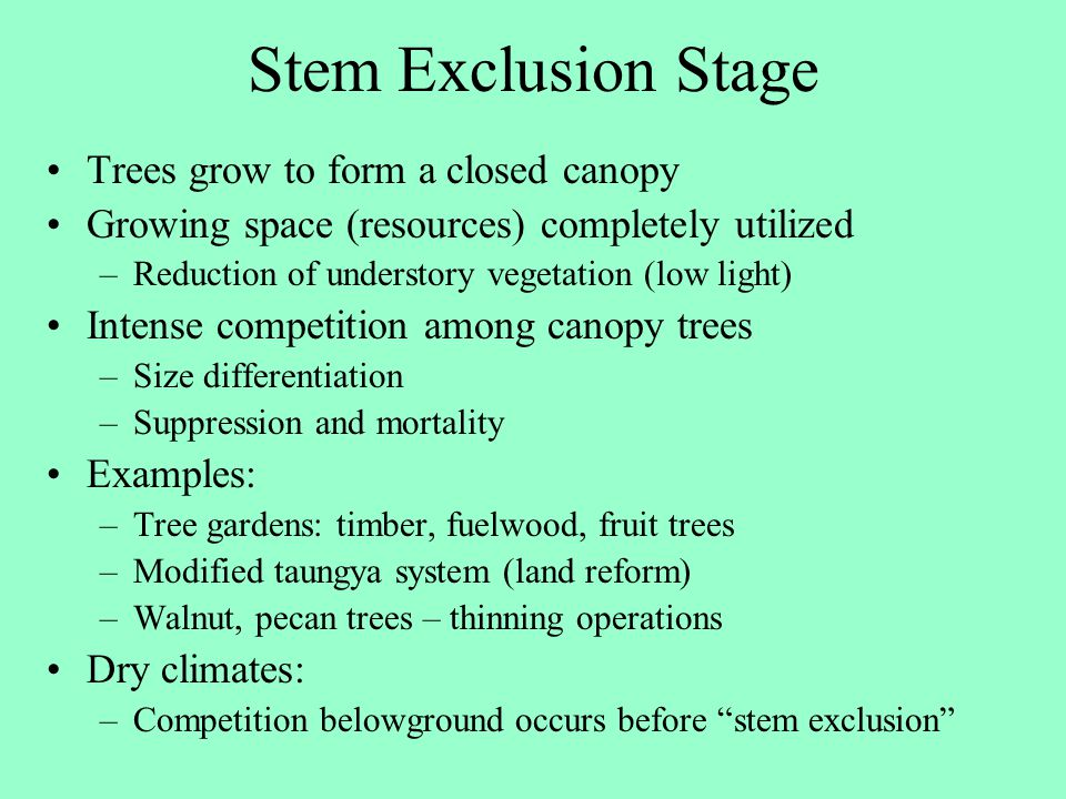 Stem Exclusion Stage Trees grow to form a closed canopy