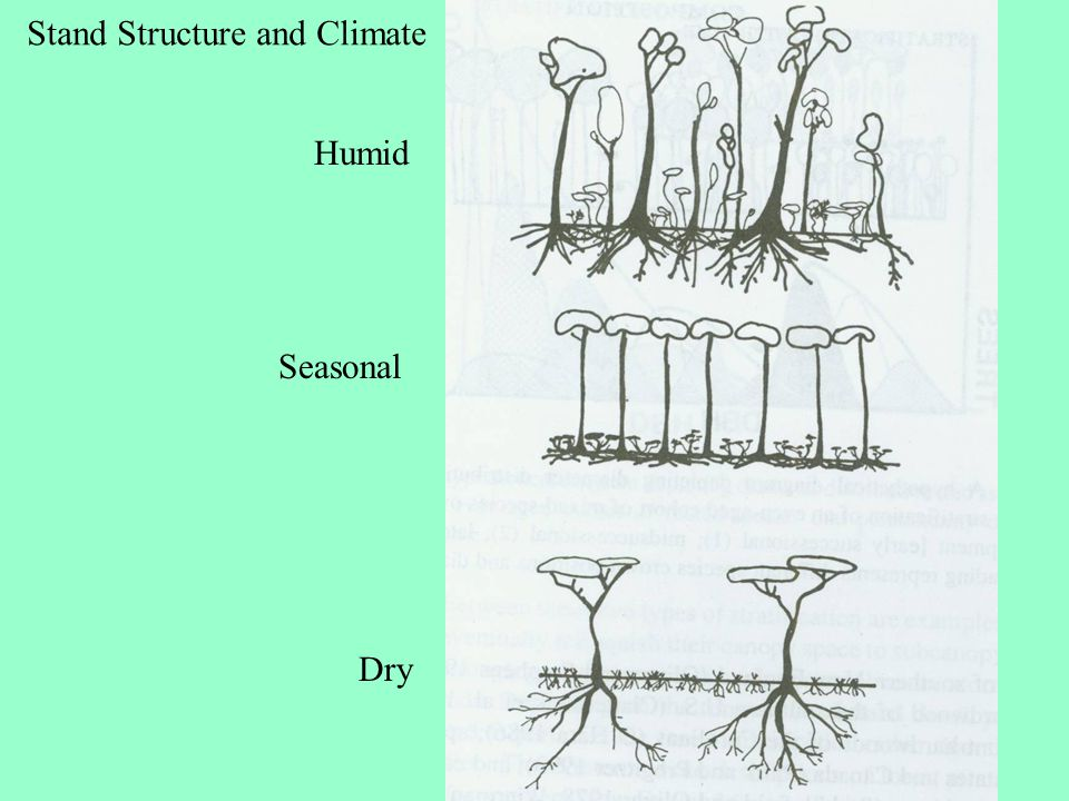 Stand Structure and Climate