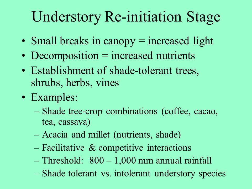 Understory Re-initiation Stage
