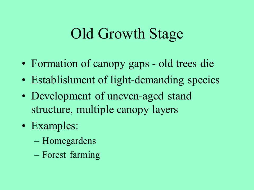 Old Growth Stage Formation of canopy gaps - old trees die