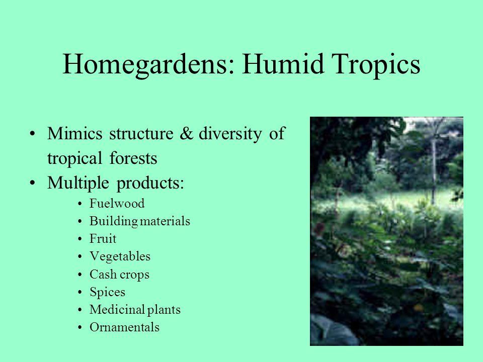 Homegardens: Humid Tropics
