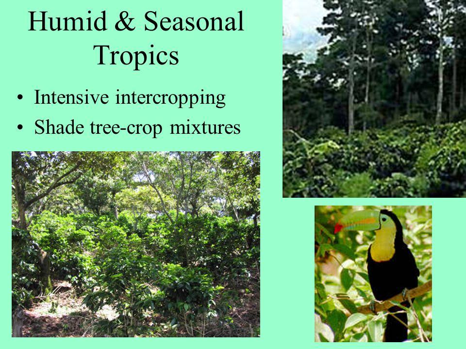 Humid & Seasonal Tropics