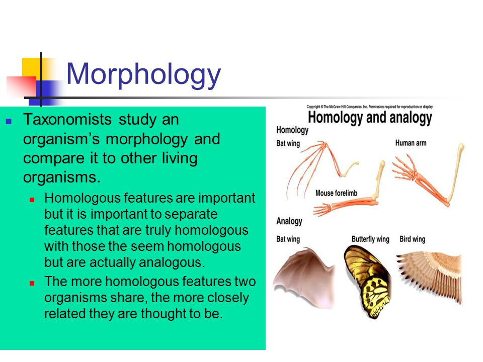 Morphology Taxonomists study an organism's morphology and compare it to other living organisms.