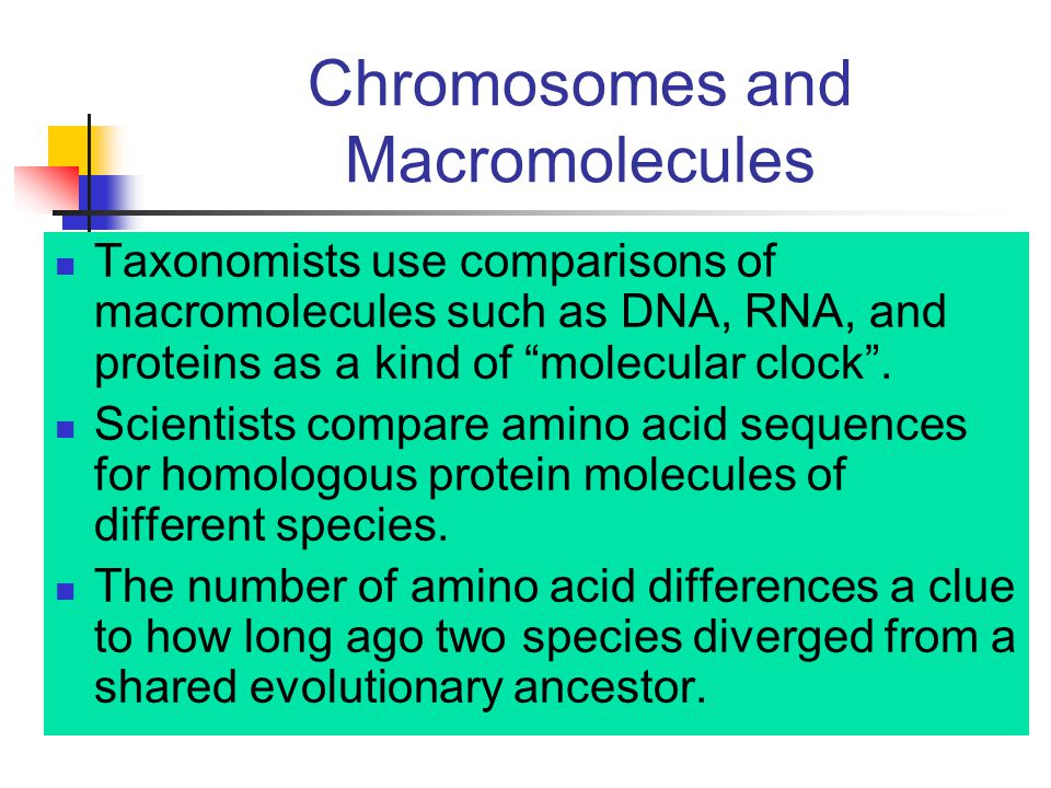 Chromosomes and Macromolecules