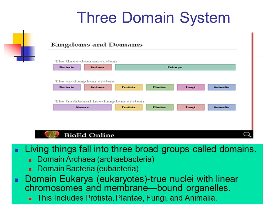Three Domain System Living things fall into three broad groups called domains. Domain Archaea (archaebacteria)