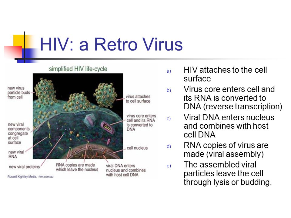 HIV: a Retro Virus HIV attaches to the cell surface