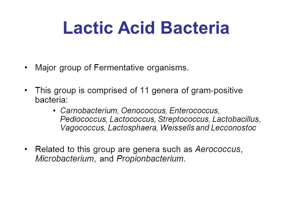 Lactic Acid Bacteria Major group of Fermentative organisms.