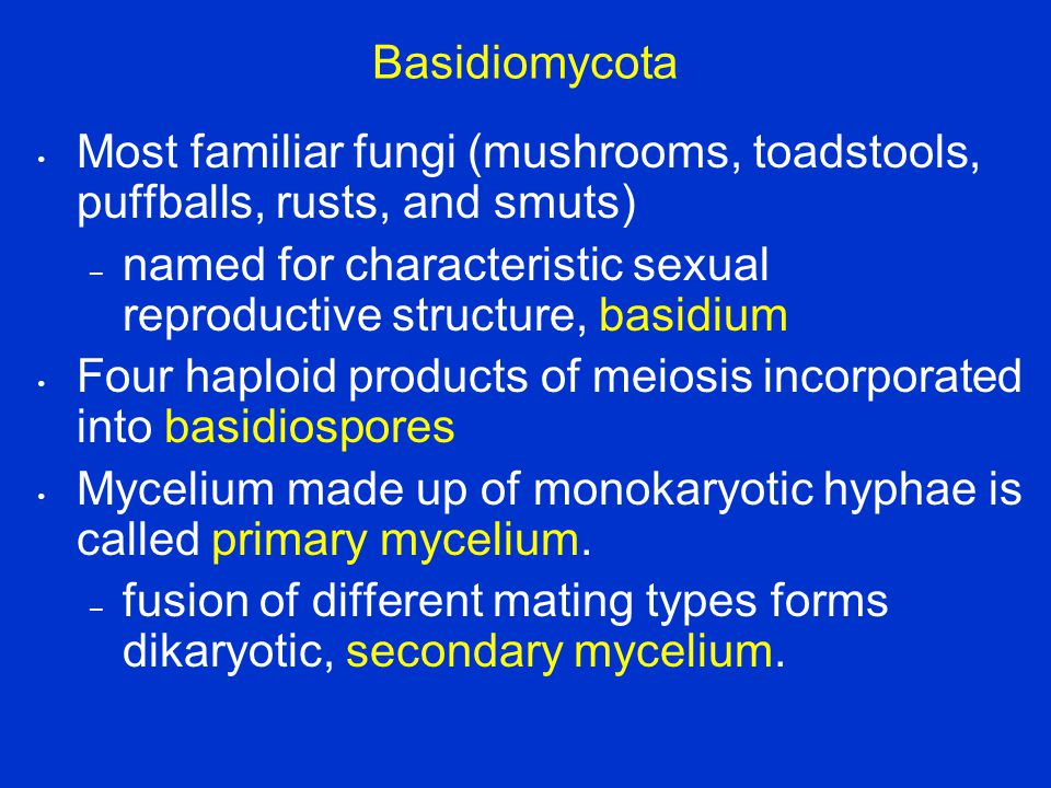 Basidiomycota Most familiar fungi (mushrooms, toadstools, puffballs, rusts, and smuts)