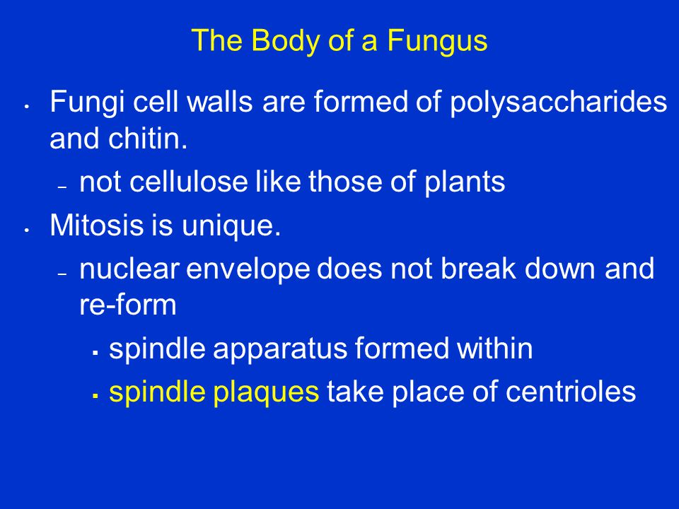 The Body of a Fungus Fungi cell walls are formed of polysaccharides and chitin. not cellulose like those of plants.