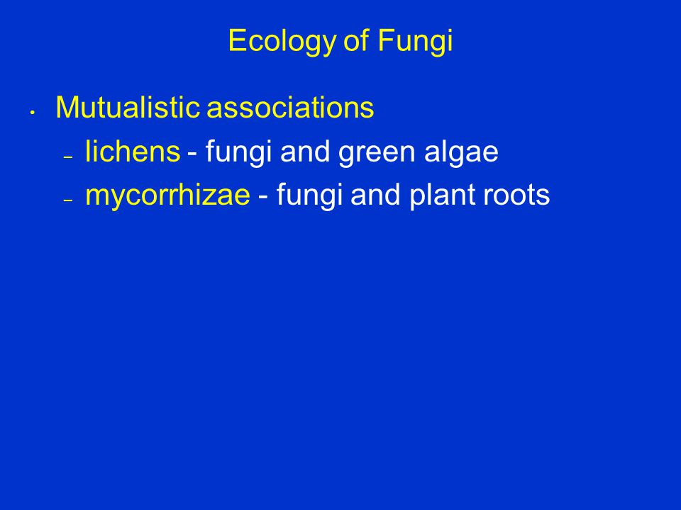Ecology of Fungi Mutualistic associations. lichens - fungi and green algae.