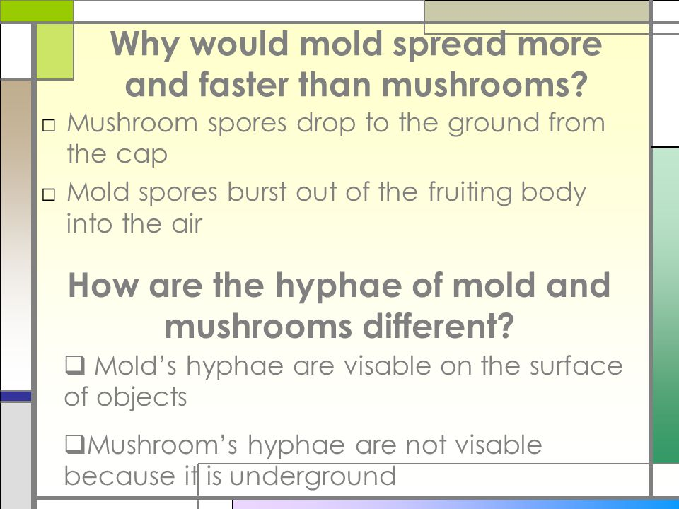 Why would mold spread more and faster than mushrooms