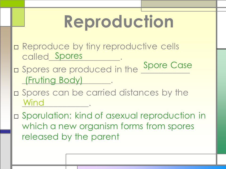 Reproduction Reproduce by tiny reproductive cells called________________. Spores are produced in the ___________ ____________________.
