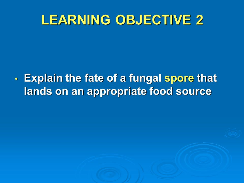 LEARNING OBJECTIVE 2 Explain the fate of a fungal spore that lands on an appropriate food source