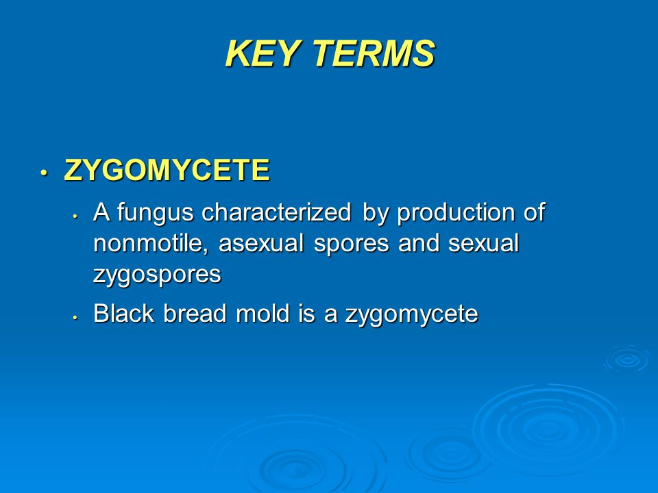 KEY TERMS ZYGOMYCETE. A fungus characterized by production of nonmotile, asexual spores and sexual zygospores.