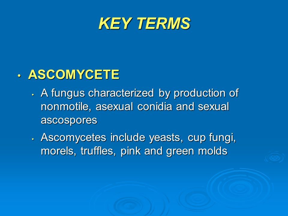 KEY TERMS ASCOMYCETE. A fungus characterized by production of nonmotile, asexual conidia and sexual ascospores.