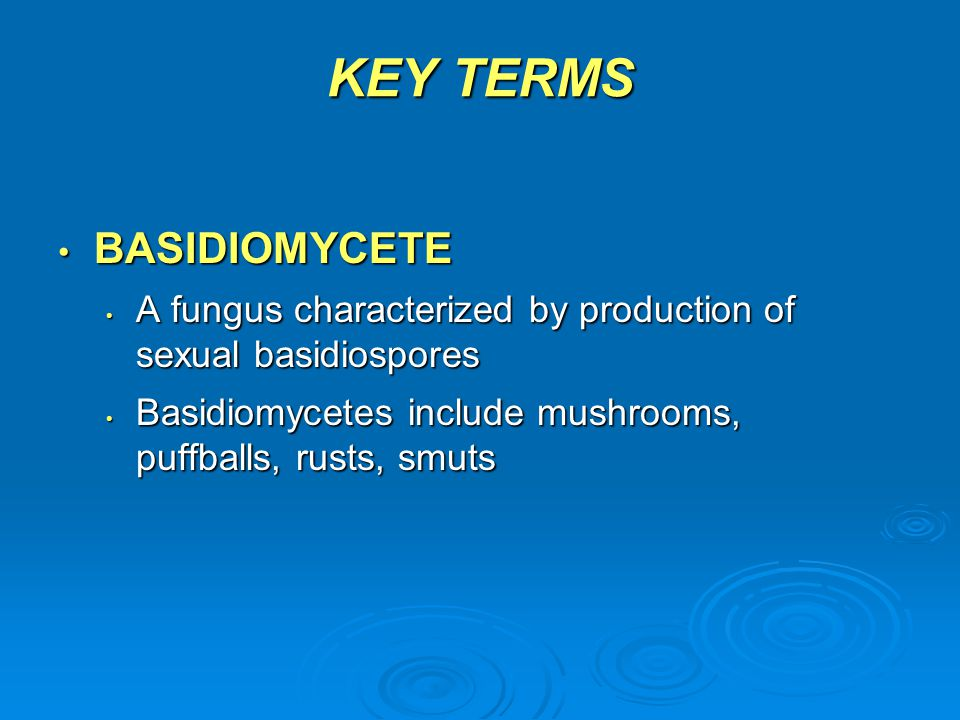 KEY TERMS BASIDIOMYCETE