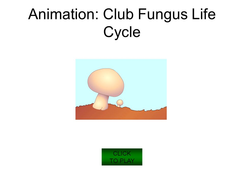Animation: Club Fungus Life Cycle