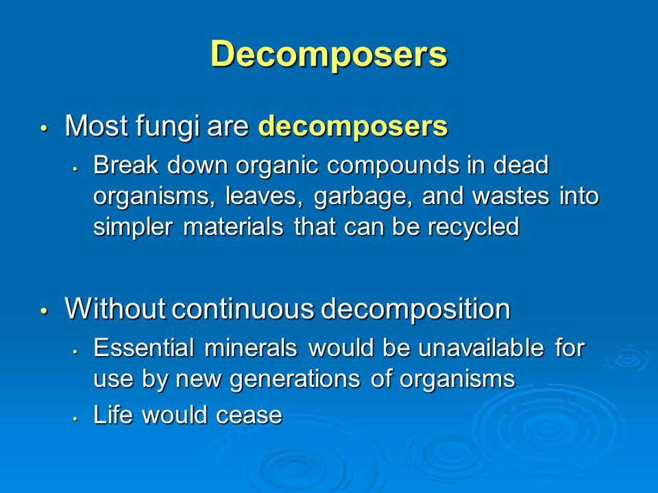 Decomposers Most fungi are decomposers