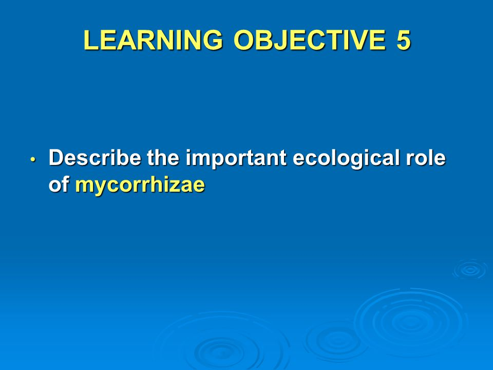 LEARNING OBJECTIVE 5 Describe the important ecological role of mycorrhizae