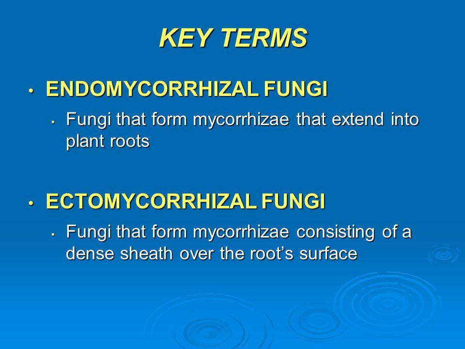 KEY TERMS ENDOMYCORRHIZAL FUNGI ECTOMYCORRHIZAL FUNGI