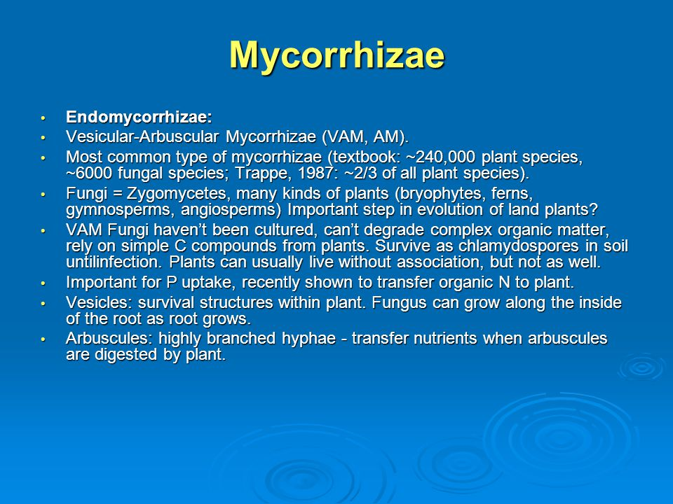 Mycorrhizae Endomycorrhizae: