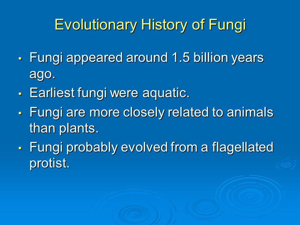 Evolutionary History of Fungi