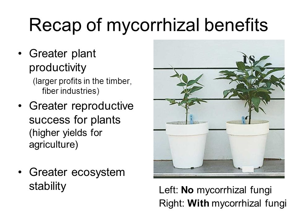Recap of mycorrhizal benefits