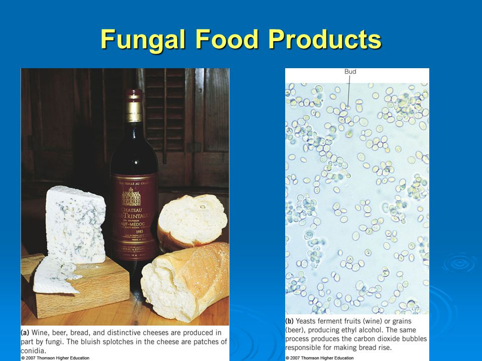 Fungal Food Products