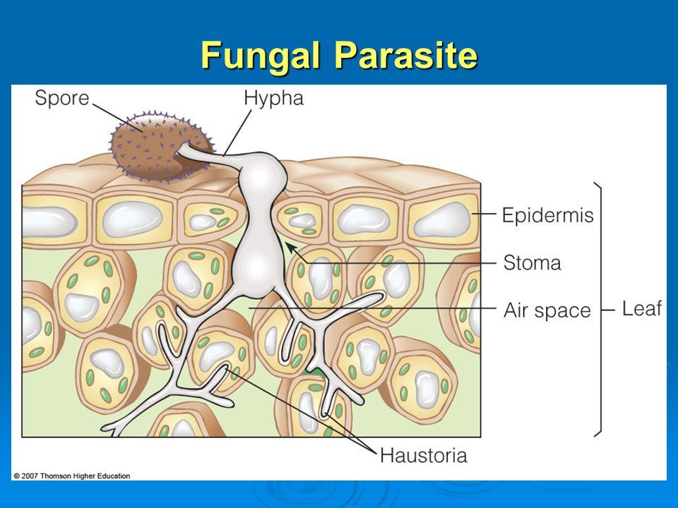 Fungal Parasite