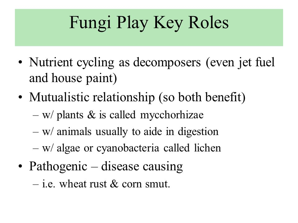 Fungi Play Key Roles Nutrient cycling as decomposers (even jet fuel and house paint) Mutualistic relationship (so both benefit)