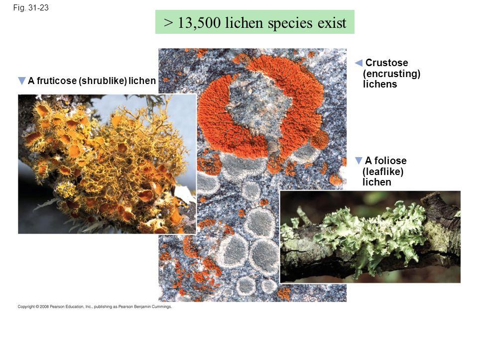 > 13,500 lichen species exist
