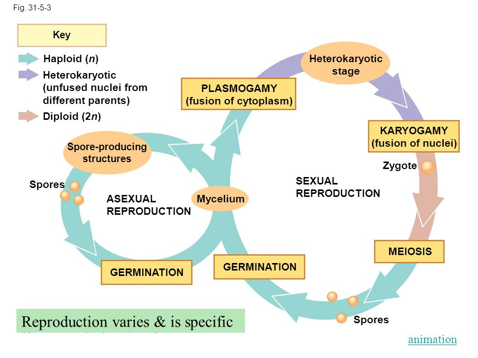 Reproduction varies & is specific