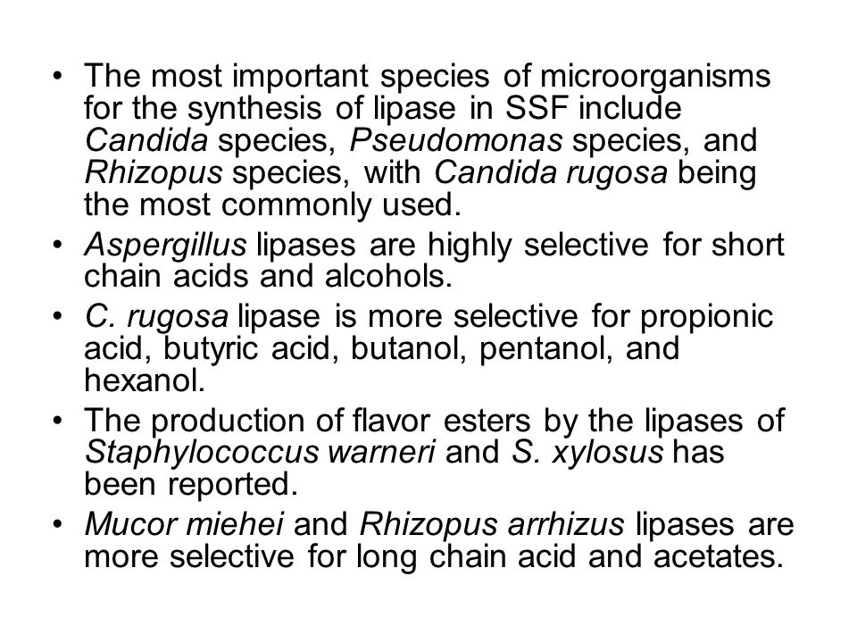 The most important species of microorganisms for the synthesis of lipase in SSF include Candida species, Pseudomonas species, and Rhizopus species, with Candida rugosa being the most commonly used.