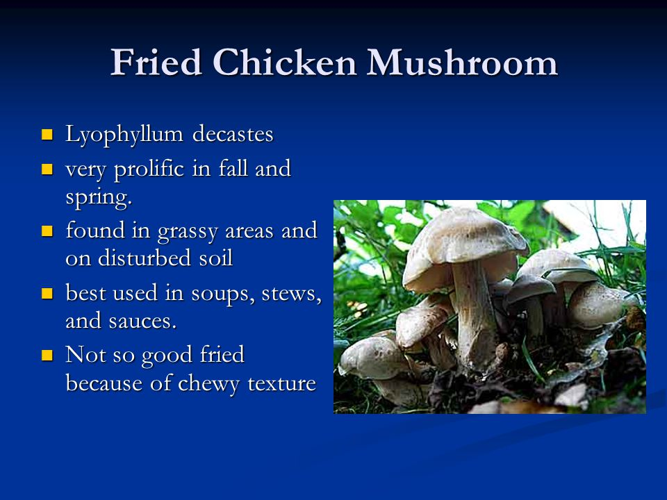 Fried Chicken Mushroom
