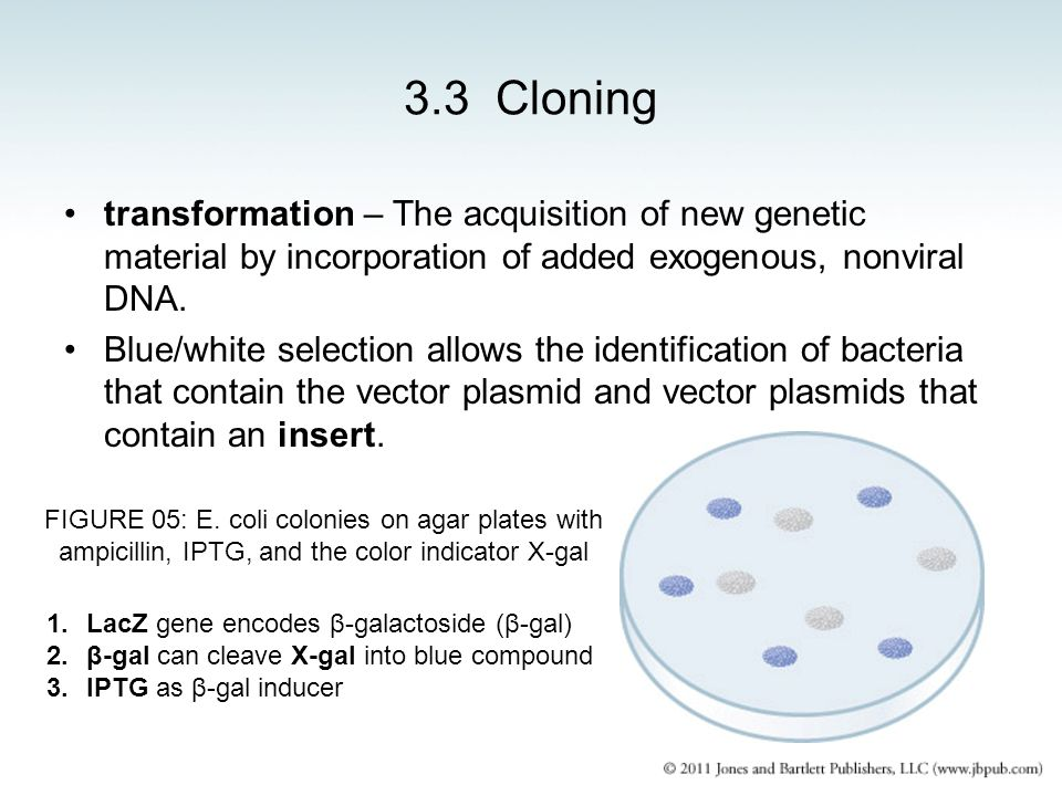 3.3 Cloning transformation – The acquisition of new genetic material by incorporation of added exogenous, nonviral DNA.