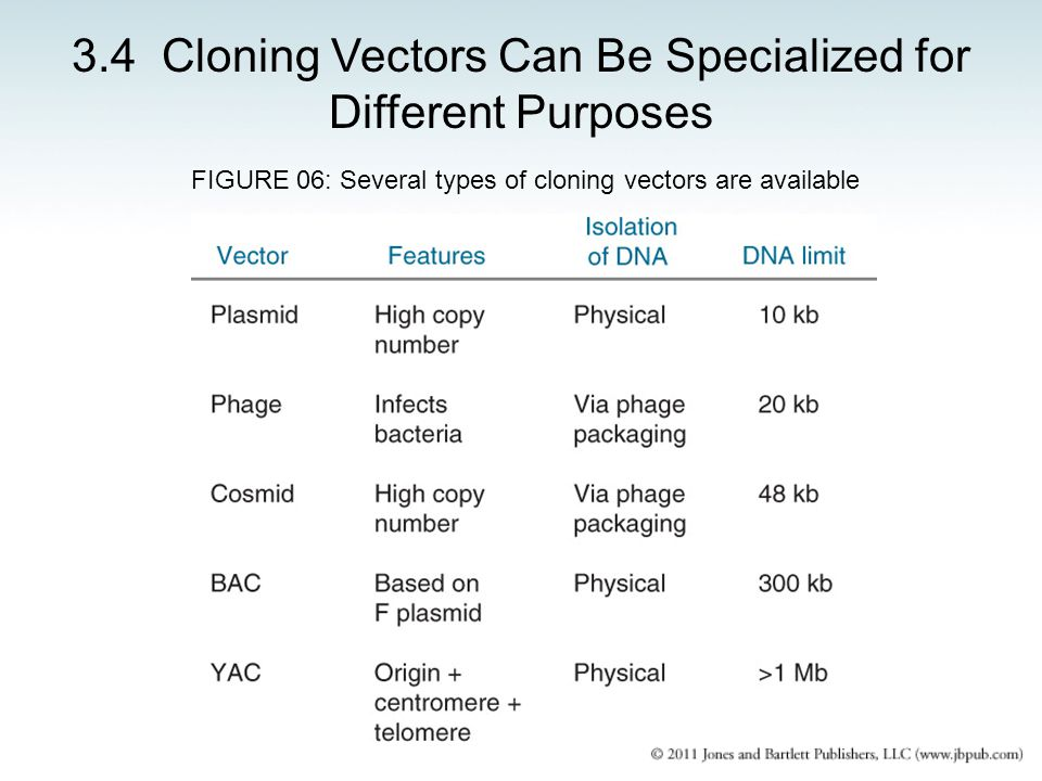 3.4 Cloning Vectors Can Be Specialized for Different Purposes