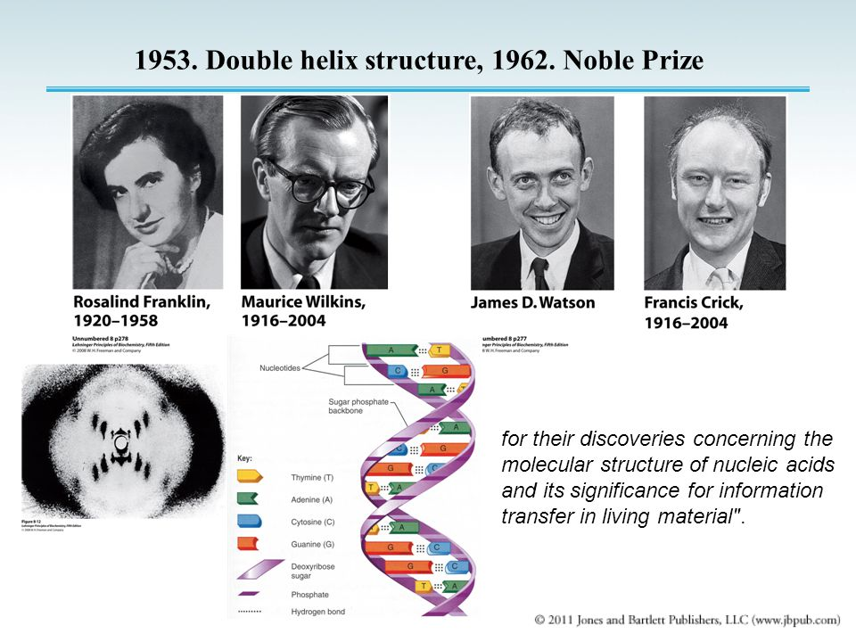 1953. Double helix structure, 1962. Noble Prize