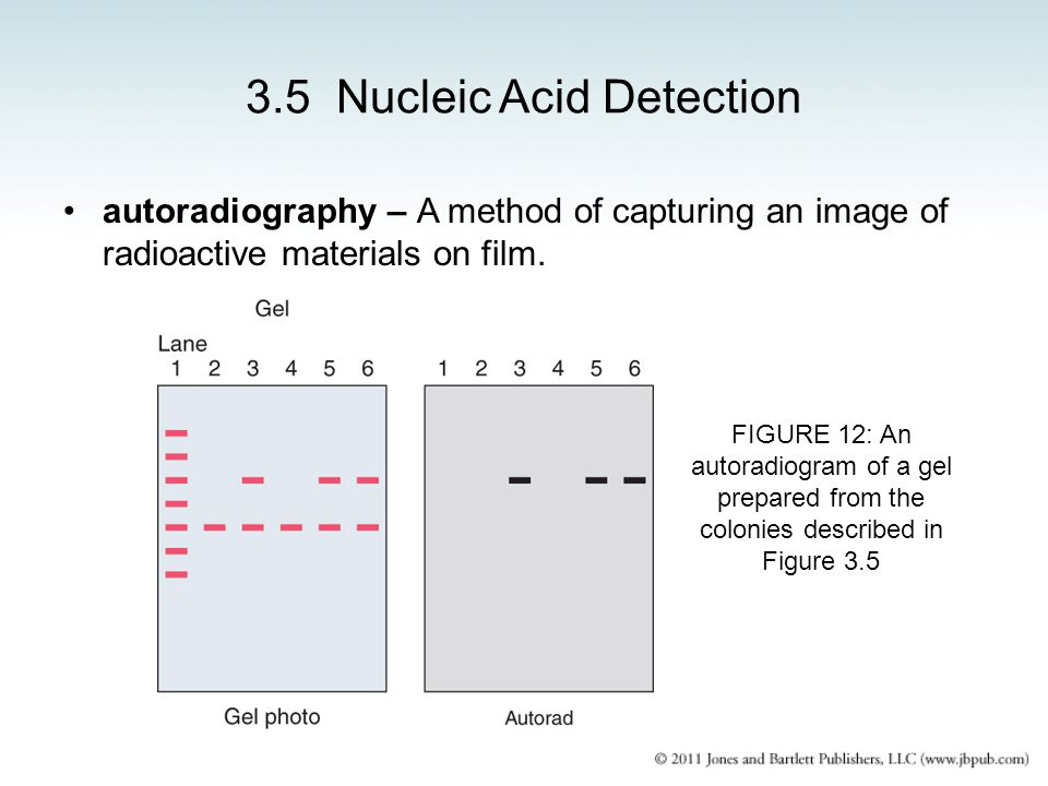 3.5 Nucleic Acid Detection