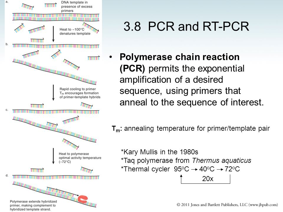 3.8 PCR and RT-PCR