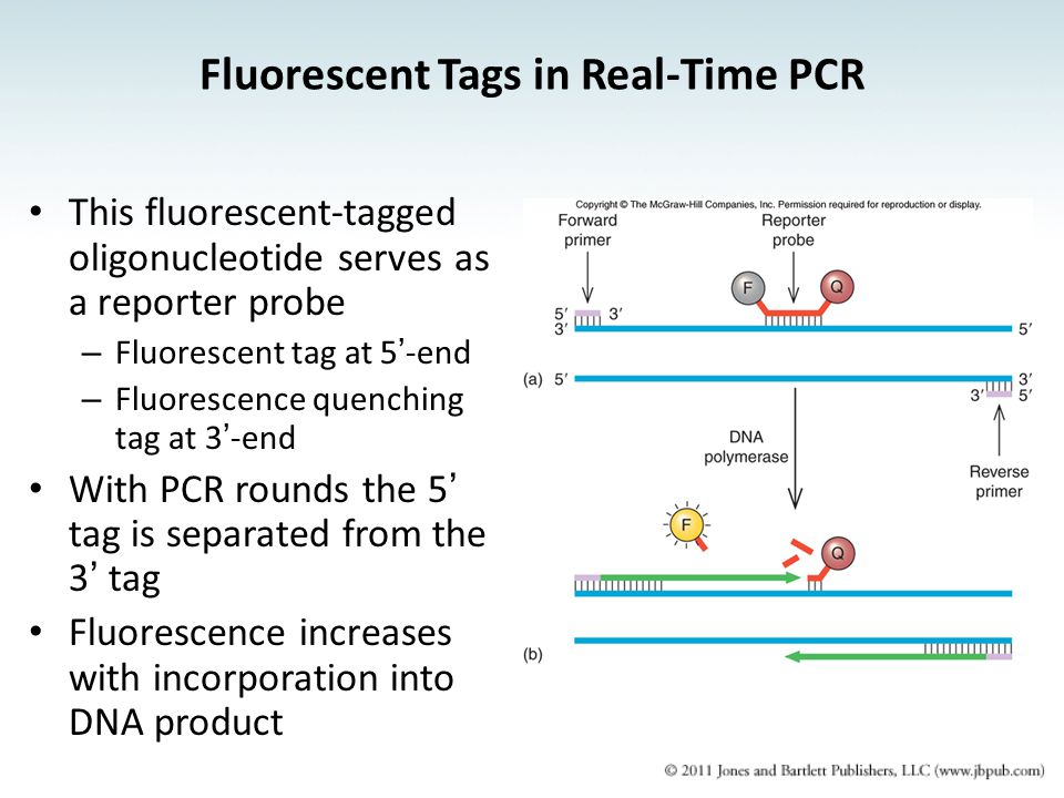 Fluorescent Tags in Real-Time PCR