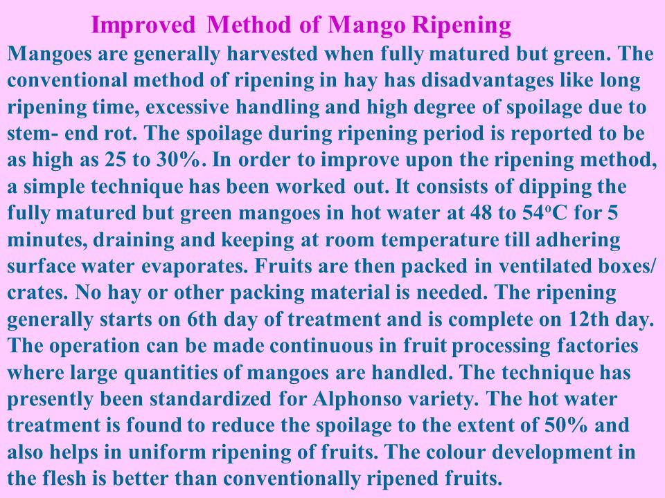 Improved Method of Mango Ripening Mangoes are generally harvested when fully matured but green.